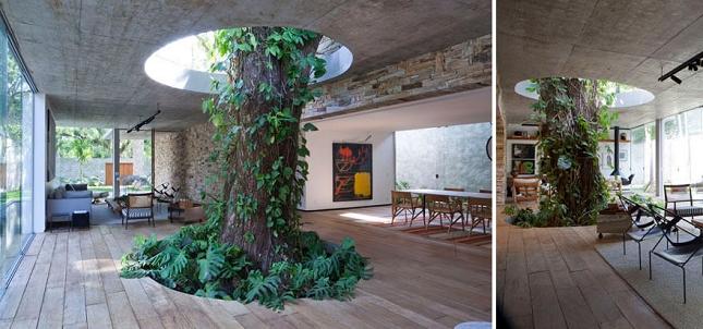 Architecte-Nature-Arbre-10