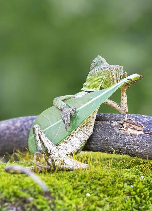 lézard Lezard-Reptile
