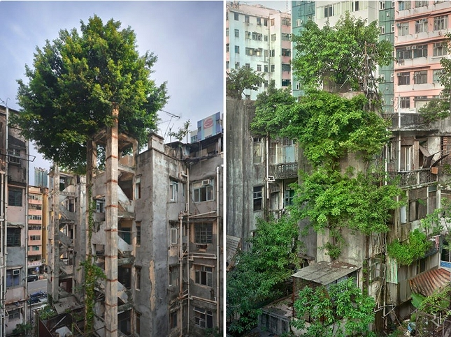 The victory of the trees over concrete - Hong Kong