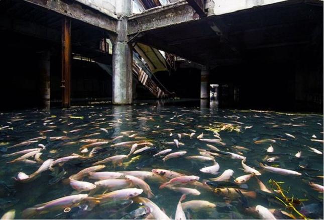 Un aquarium naturel dans un centre commercial abandonné à Bangkok -Thaïlande