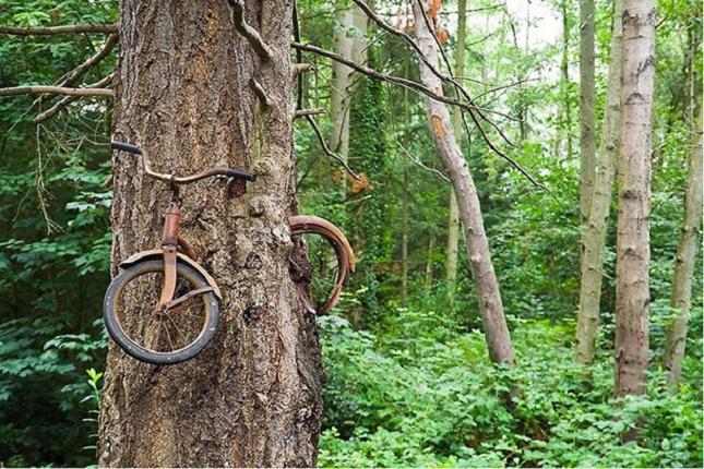 Un vélo qui a été mangé par un arbre