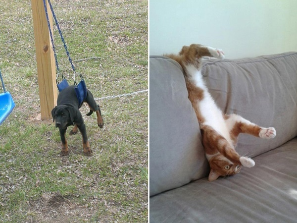 chiens-chats-animaux-piege-10