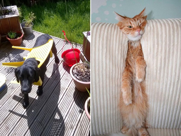 chiens-chats-animaux-piege-15