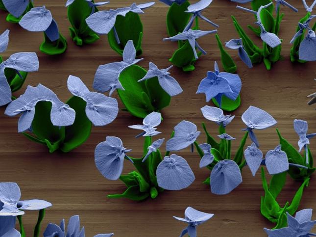 Nanotechnologie-chimiques-Fleur-12