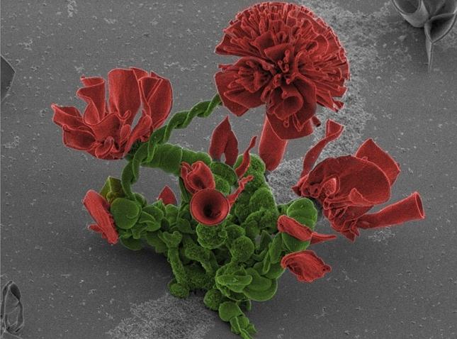 Nanotechnologie-chimiques-Fleur-19