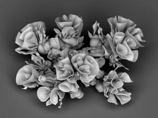 Nanotechnologie-chimiques-Fleur-8