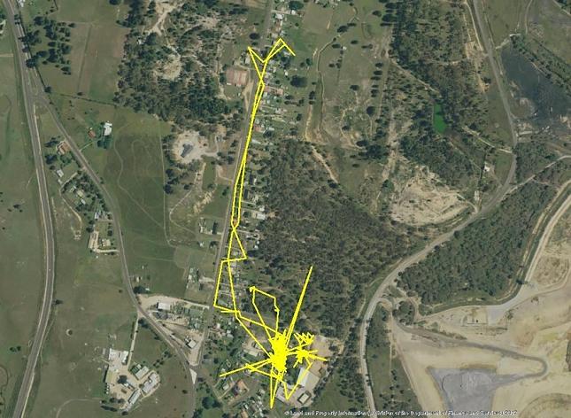 Chat-Nuit-parcour-distance-deplacemant-GPS-2