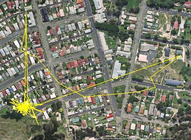 Chat-Nuit-parcour-distance-deplacemant-GPS-5