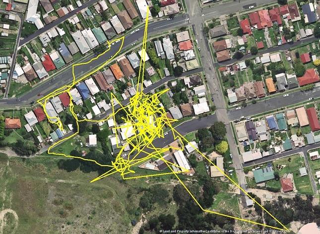 Chat-Nuit-parcour-distance-deplacemant-GPS-6
