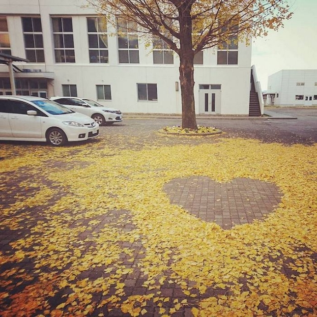 feuilles-mortes-japon-oeuvres-13