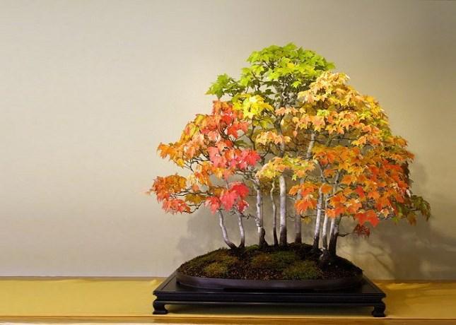 Bonsai à l'automne