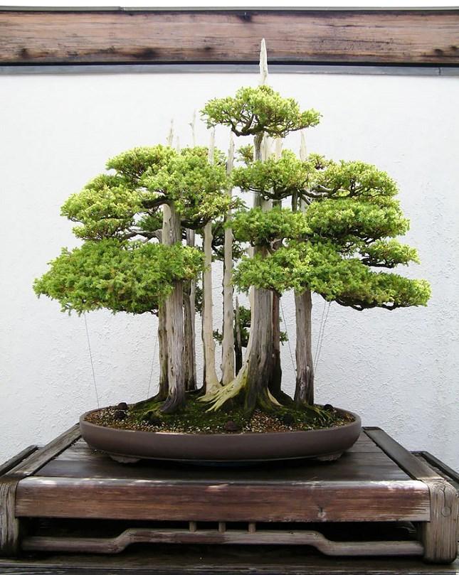 Forêt de Bonsais